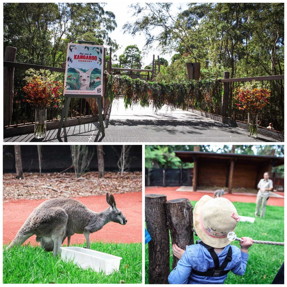 Mamma Knows East - Healesville Sanctuary Kangaroo Country 1.jpg