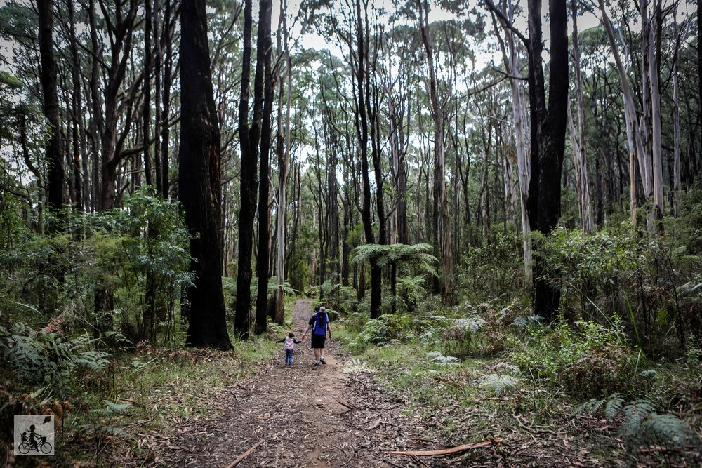 Doongalla Forest - Mamma Knows East (52 of 64).jpg