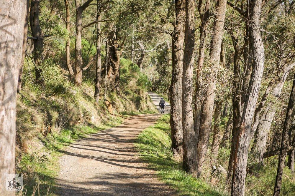Burkes Track, Mt Dandenong - Mamma Knows East (11 of 46).jpg