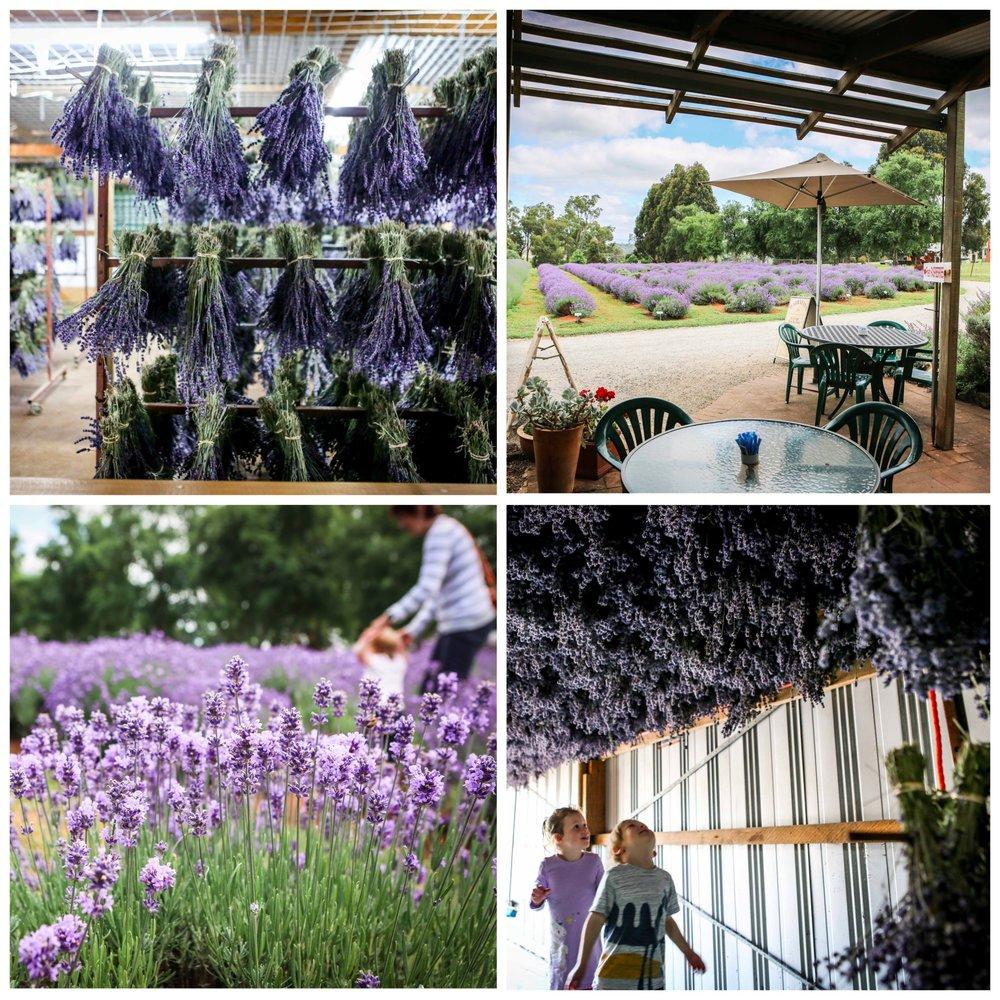 01 Warratina Lavender Farm Wandin - Mamma Knows East (1 of 62).jpg