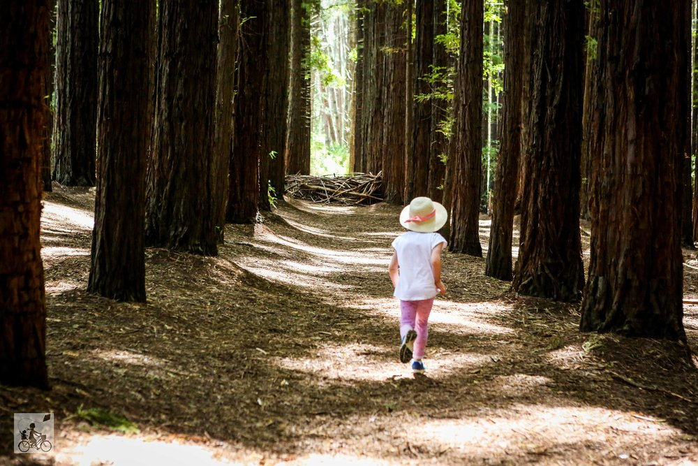 Redwood Forest Warburton - Mamma Knows East (5 of 55).jpg