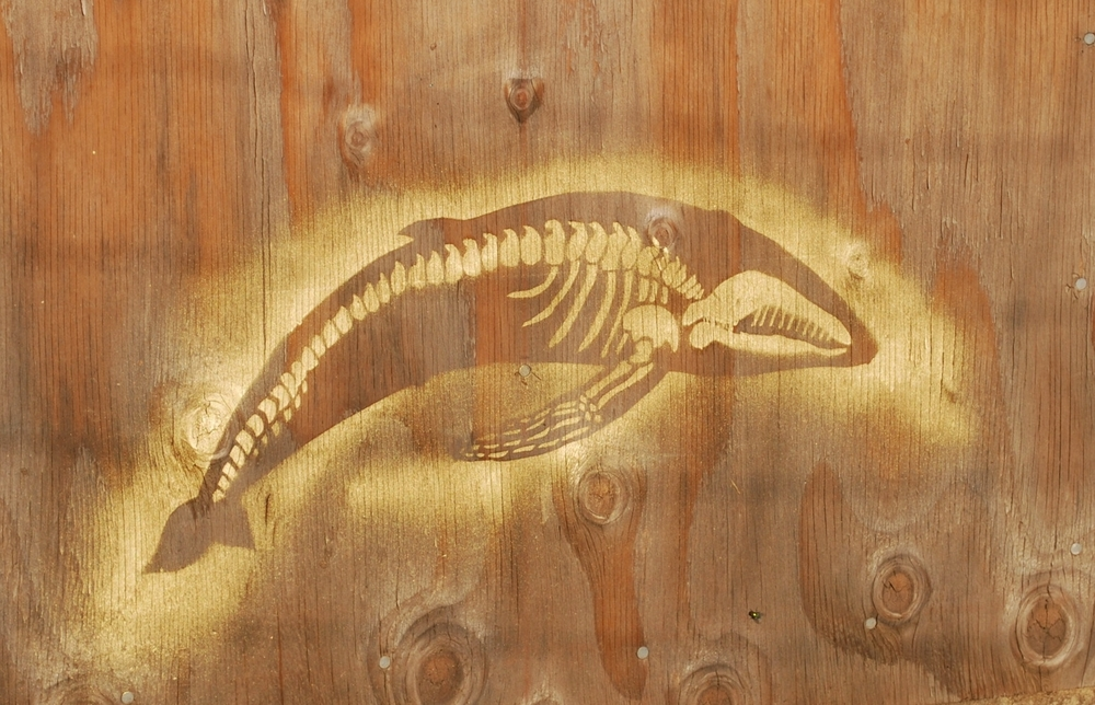 Whalebones.JPG