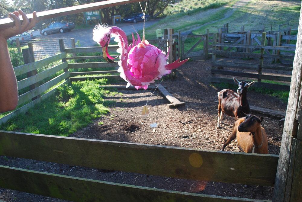 flamingogoats.JPG