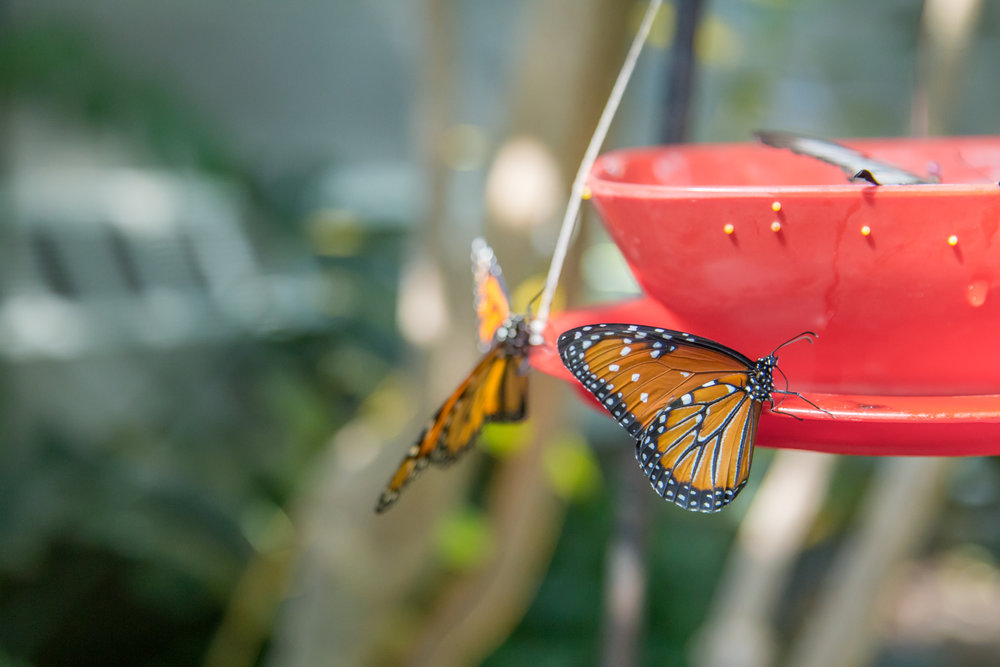 butterfly-greenhouse.jpg