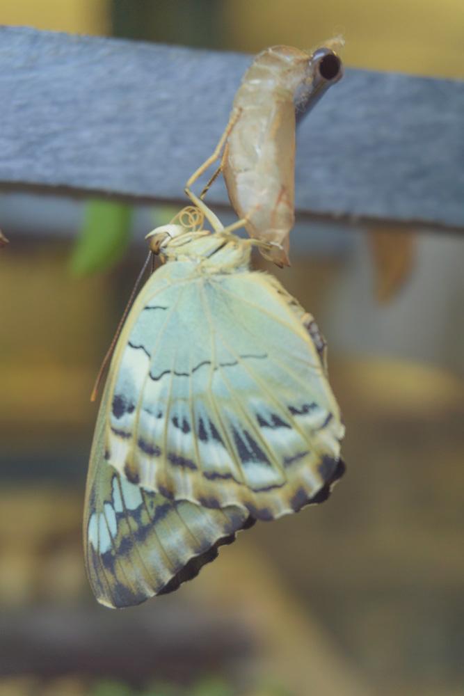 live-butterfly-garden.jpg