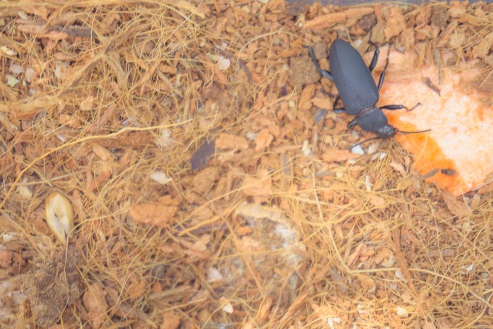 butterfly-habitat.jpg