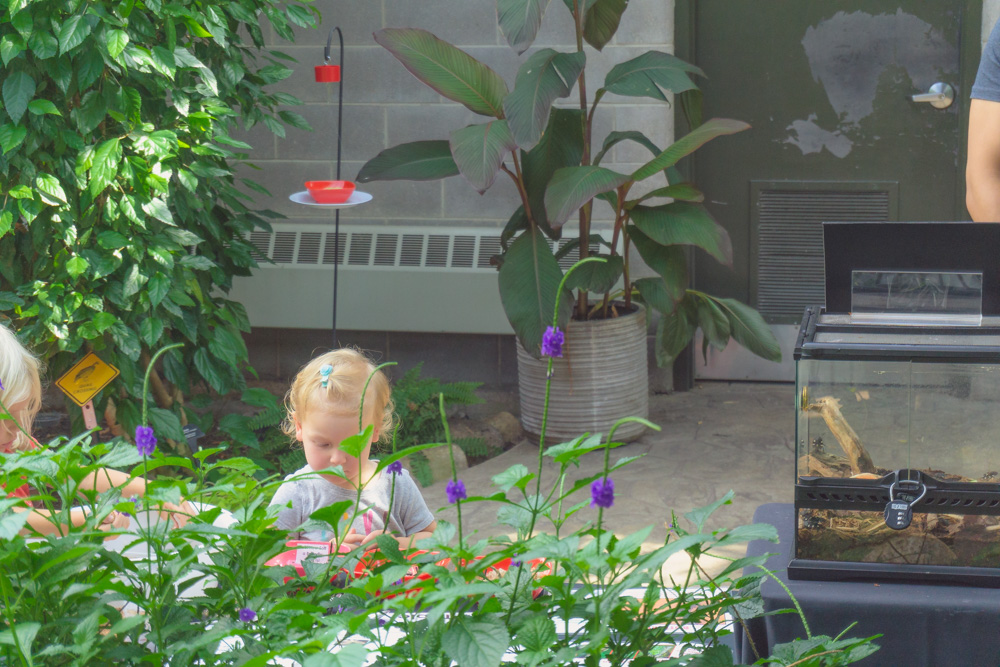 Cambridge Butterfly Conservatory | Touch Table