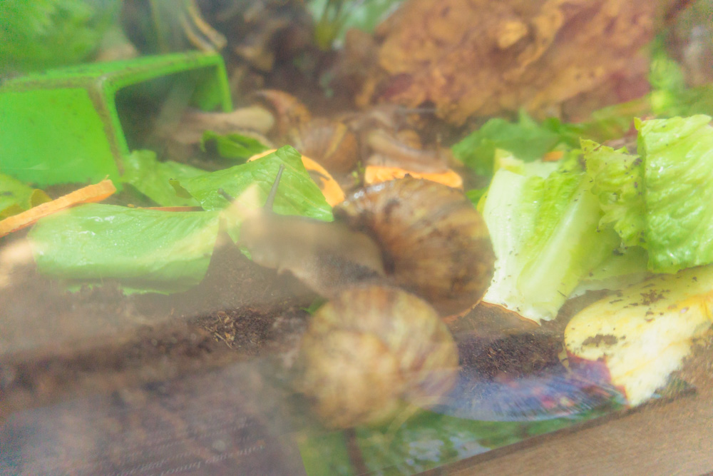 Cambridge Butterfly Conservatory | Snails