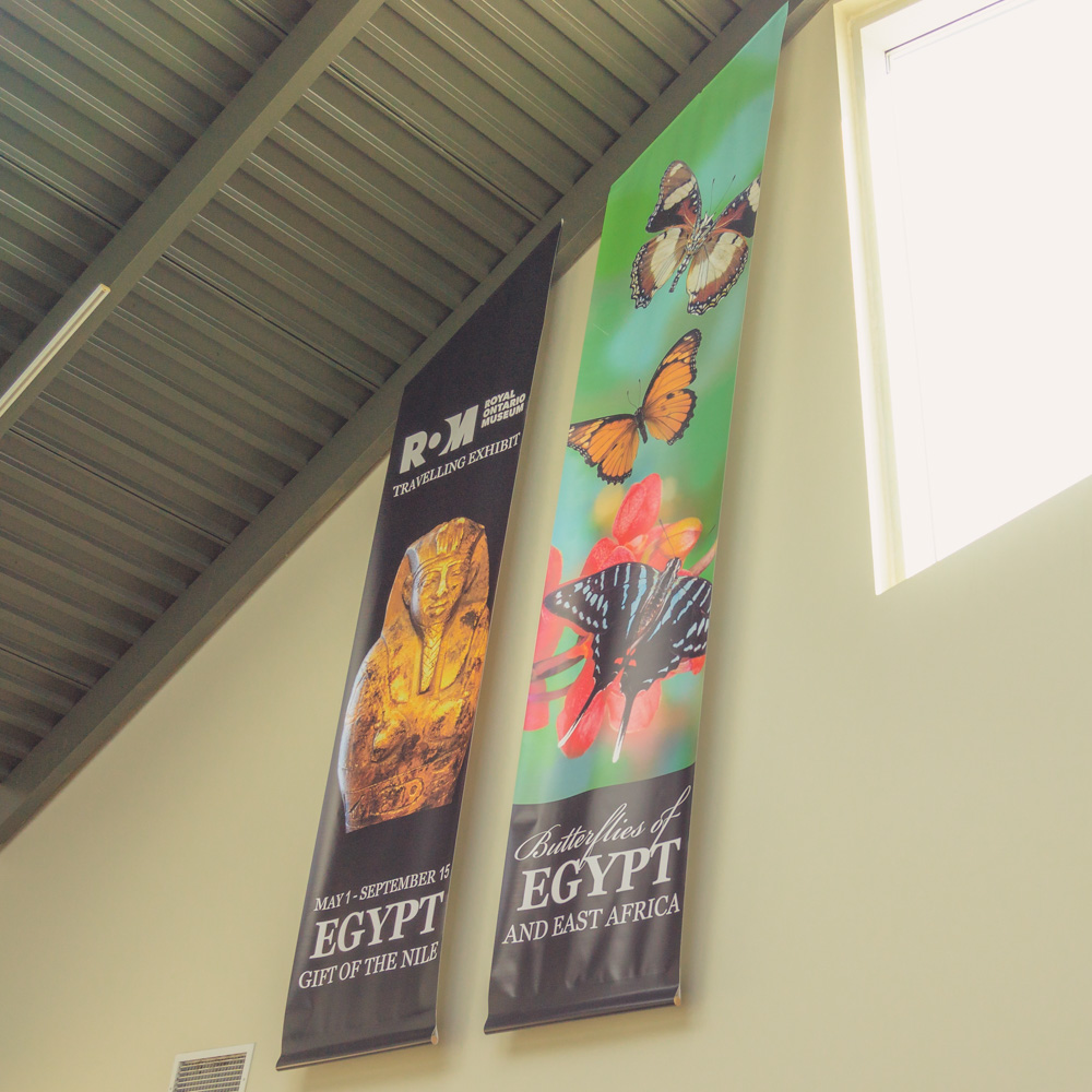 Cambridge Butterfly Conservatory | ROM | EGYPT: Gift of The Nile