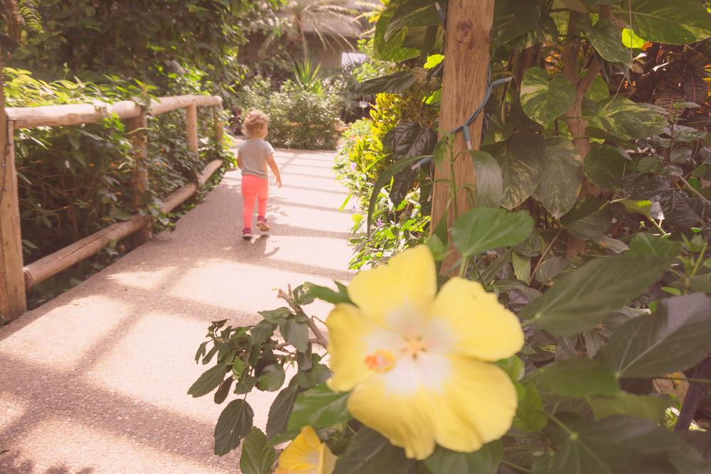 cambridge-butterfly-conservatory.jpg