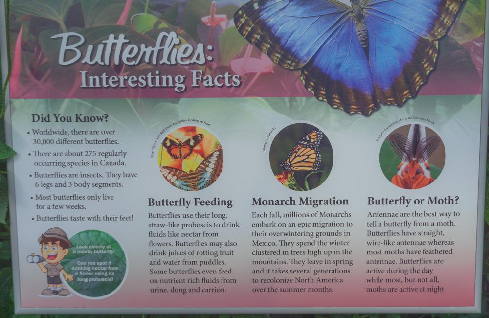 Cambridge Butterfly Conservatory | Butterflies Facts