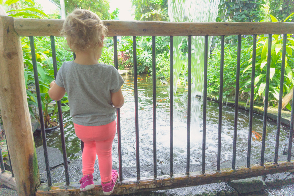 Cambridge Butterfly Conservatory | The Pond With Turtles and Fish