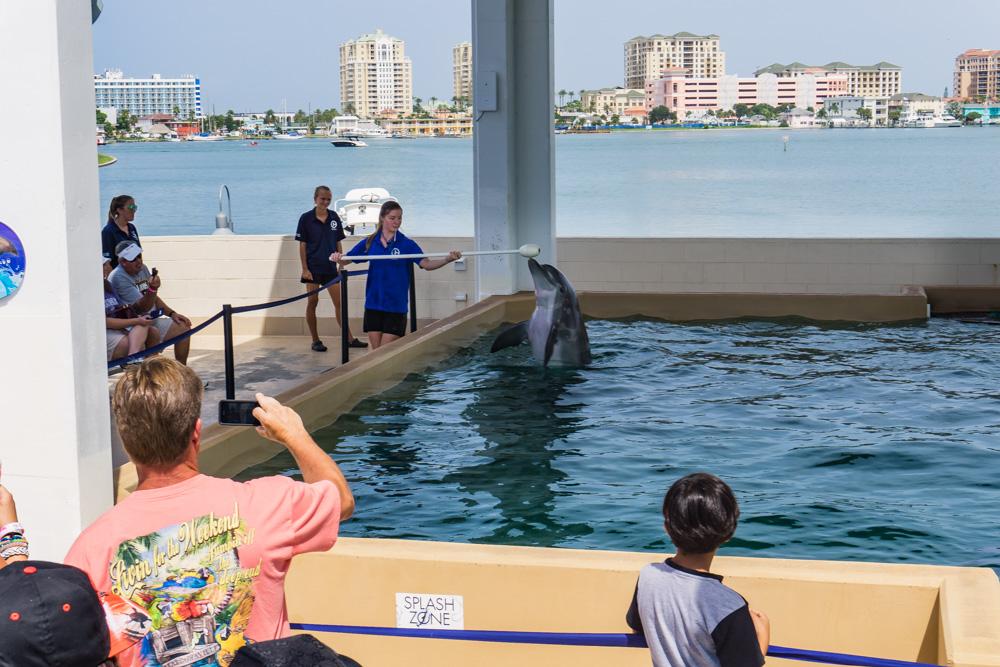 Clearwater Marine Aquarium |Nicholas