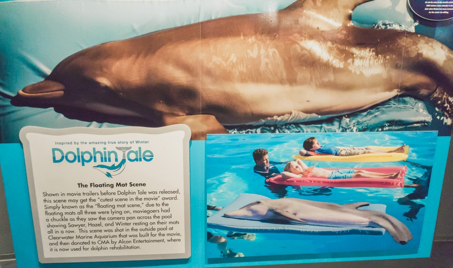 winter-the-dolphin.jpg