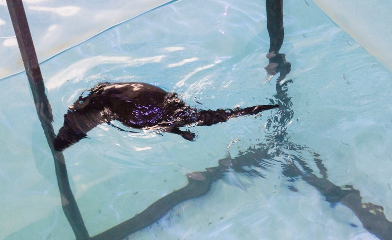 Clearwater Marine Aquarium |Otter