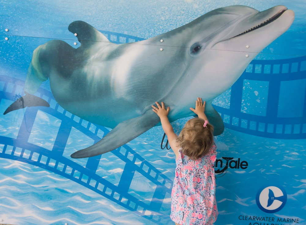 Clearwater Marine Aquarium | Dolphin Poster