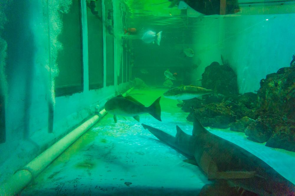 Clearwater Marine Aquarium |Marine Fish Tank