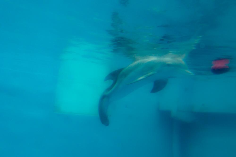 Clearwater Marine Aquarium |Winter | Underwater View