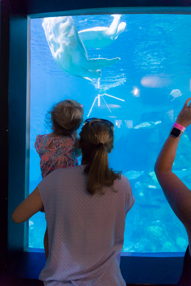 Clearwater Marine Aquarium |Turtle Pool