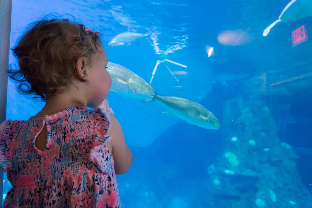 Clearwater Marine Aquarium |Turtle Pool | Watching Fishies