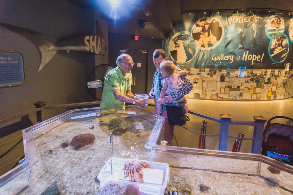 Clearwater Marine Aquarium |Tide Pool | Sea Slugs