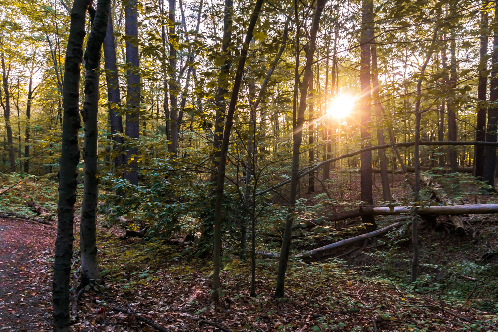 Riverwood-conservancy.jpg