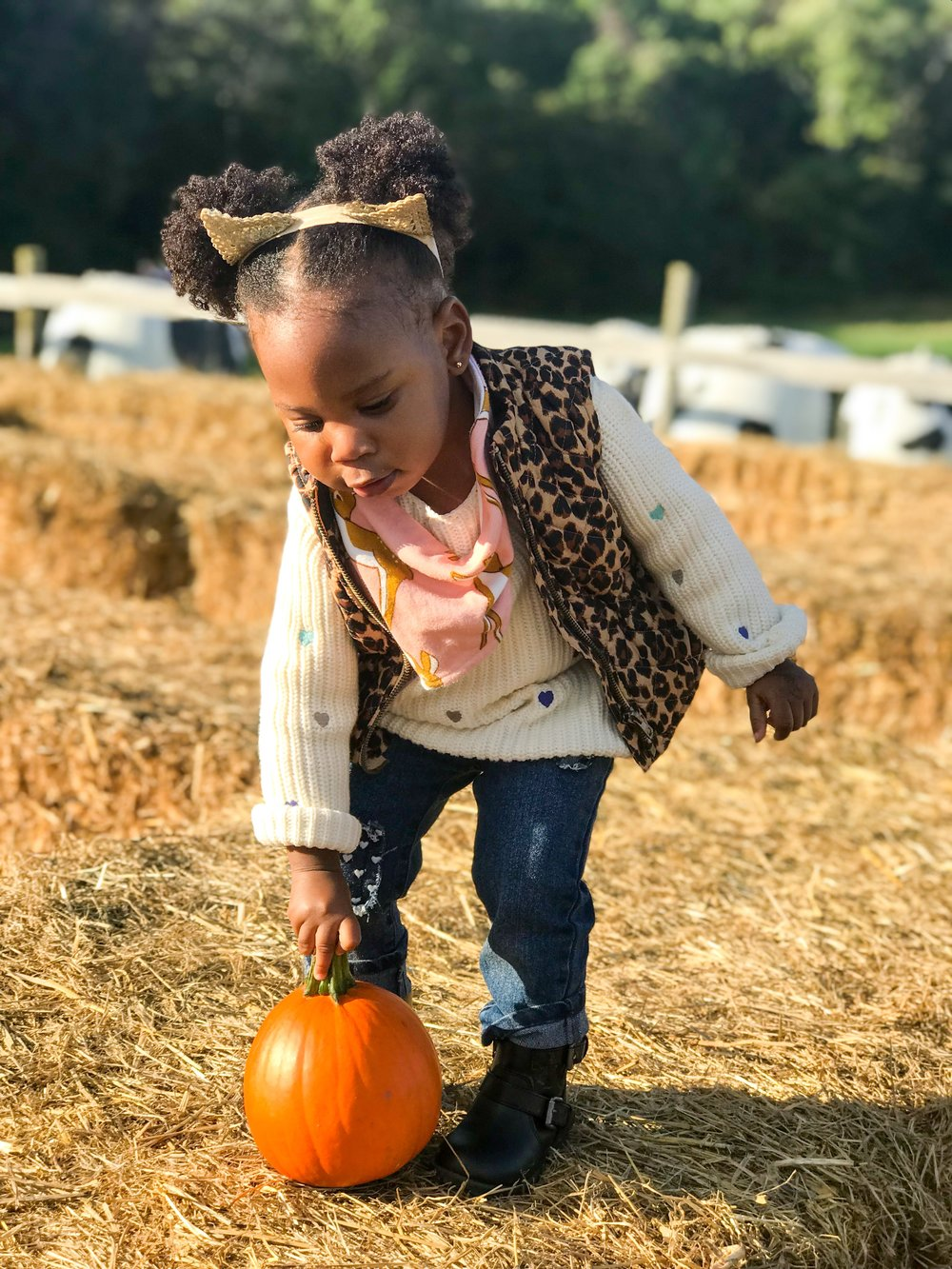 fall family fun at Clark's Elioak Farm | Pish Posh Perfect