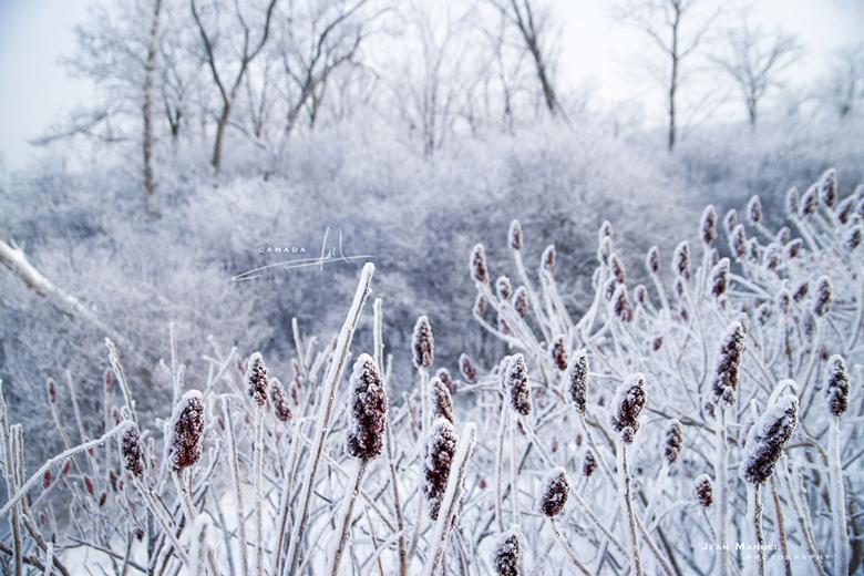 JMP-Snow.jpg