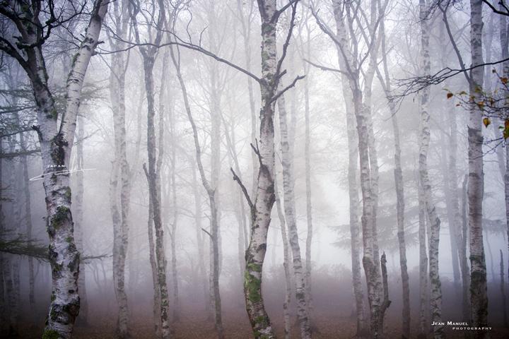 JMP-trees.jpg