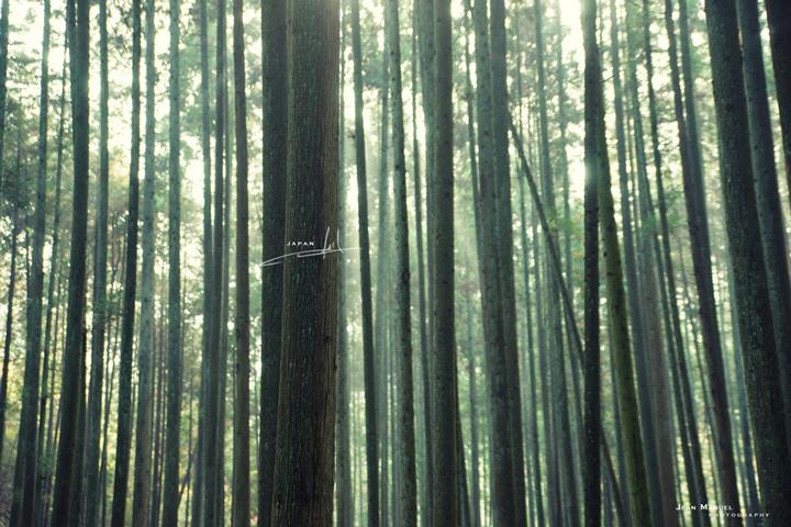 JMP-trees2.jpg