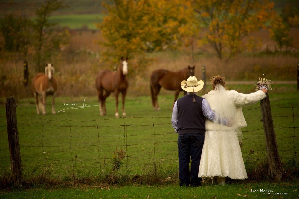 JMP-weddinghorses.jpg
