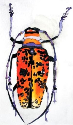 beetle_52.jpg