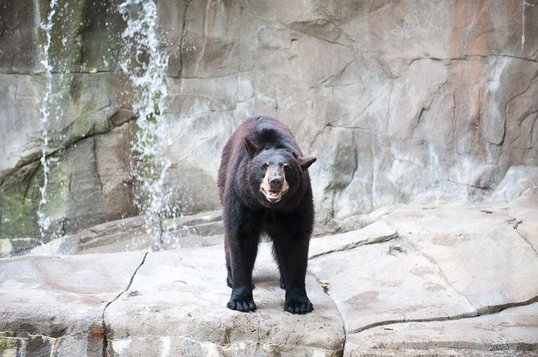 Bear smiling?