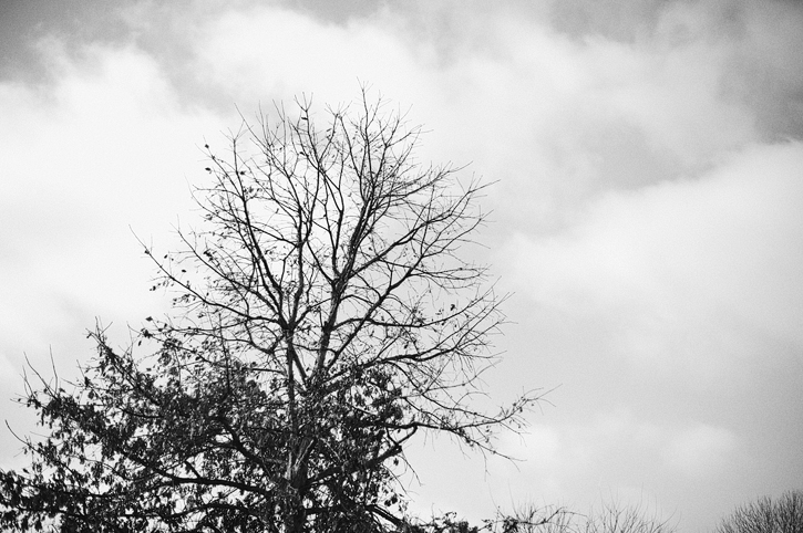 black and white image of a tree with moody looking clouds in des moines