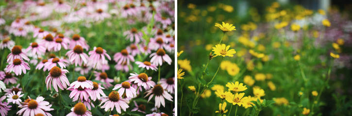 Beautiful shots of flowers in front of the hair salon in Panora, Iowa