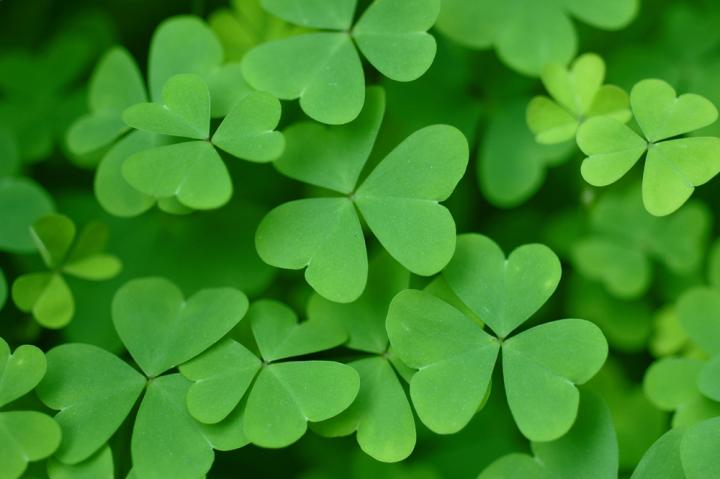 ST. PATRICK'S DAY PARTY - Join us for a Kelly Family Irish Feast with traditional and not so traditional Irish dishes, Whiskey tasting, Beer tasting, and fun! Sunday McFunday March 17th at 4:30 pm. Reservations @Owensbistro.com