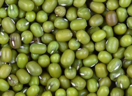 mungbean project      Together with our partners we work to help farmers to certify their mung bean production and make their produce traceable.  Read more.