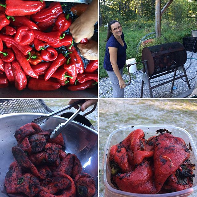 🌶!!ROASTED RED PEPPERS!!🌶 we are excited to be bringing a pepper roaster to the Rutland market tomorrow, borrowed from the wonderful flower farmers of @understoryfarm! Come check it out and buy some delicious roasted reds! #roastedredpeppers #peppers #delicious #foodismedicine @vermontfarmersmarket