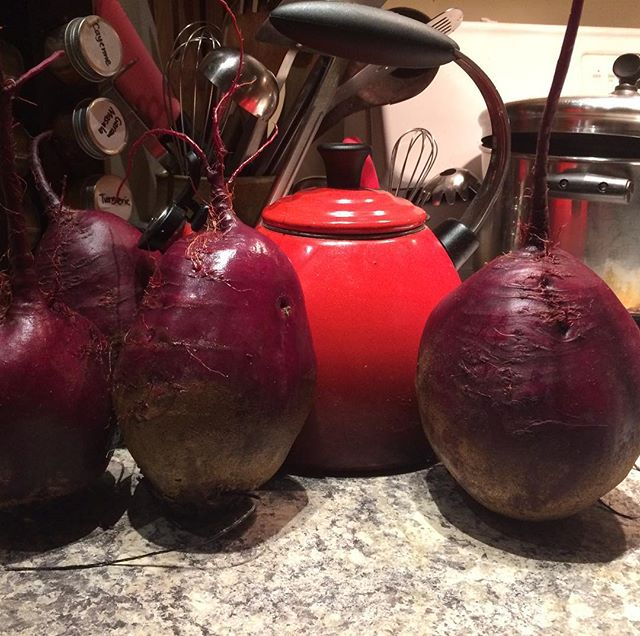 It's incredibly challenging to capture just how ginormous these beets are, but the tea kettle works pretty well for perspective  #hugebeets #beets #beetthis #beetroot