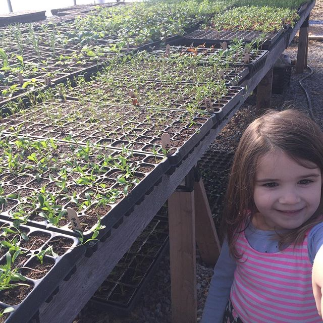 This greenhouse is full! Baby plants are off to a great start, as is our baby human who arrived a month or so ago. And this proud big sister/part-time farm helper and deliverer of imaginary chocolate eggs (yum). #spring #vermontfarm #farm #greenhouse #vermont #farmkids