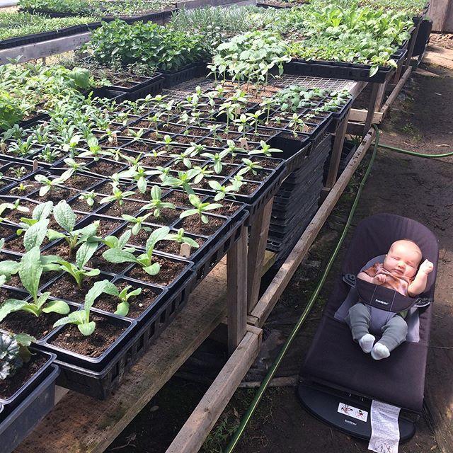 Little greenhouse helper...he keeps things interesting!