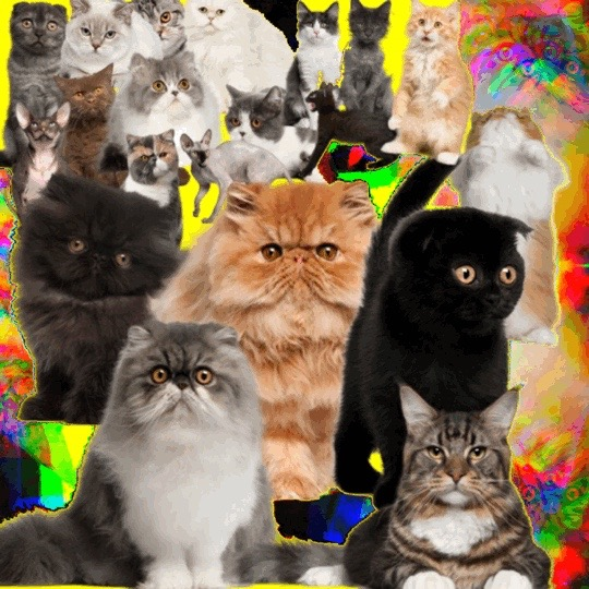 I don't even like cats,  2016, Digital collage, 540 x 540 pixels