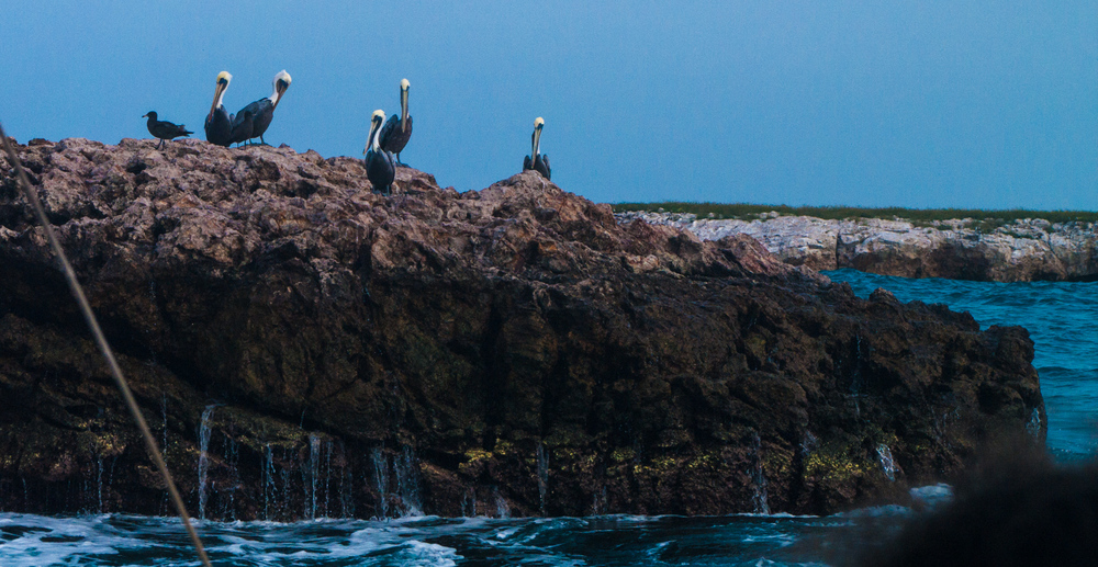 birds on boat tour.jpg