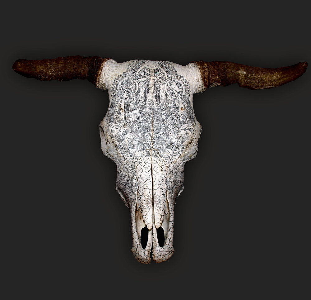 Winner of the Emerging Artist Category: Dan Power, G[RAZED], 2016, Pen and ink on bull skull; image courtesy the national archives of australia, canberra