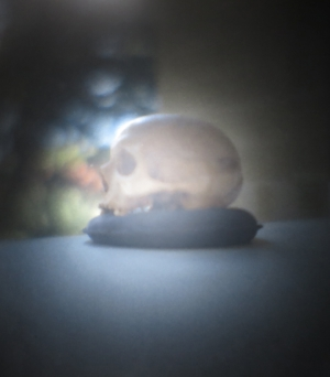 1 Dispatches:  Andrew Stephens    Paul Uhlmann,  Batavia skull (camera obscura II),  2015, photo-print on aluminium, 15 x 12cm; image courtesy the artist