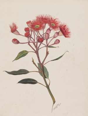 1 Dispatches: Andrew Stephens   May Gibbs,  Eucalyptus Ficifolia (Red flowering gum),  1902, watercolour on cardboard, 30.6 x 23.4cm; State Art Collection, Art Gallery of Western Australia, Perth, purchased 1975; © The Northcott Society and Cerebral Palsy Alliance 2018; photo: Bo Wong