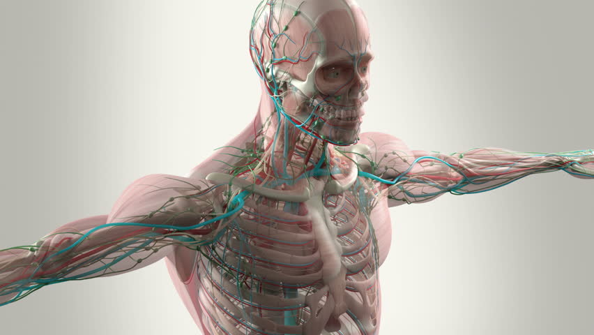 Nerves, muscles and bones   all   work together to produce movement and provide support.