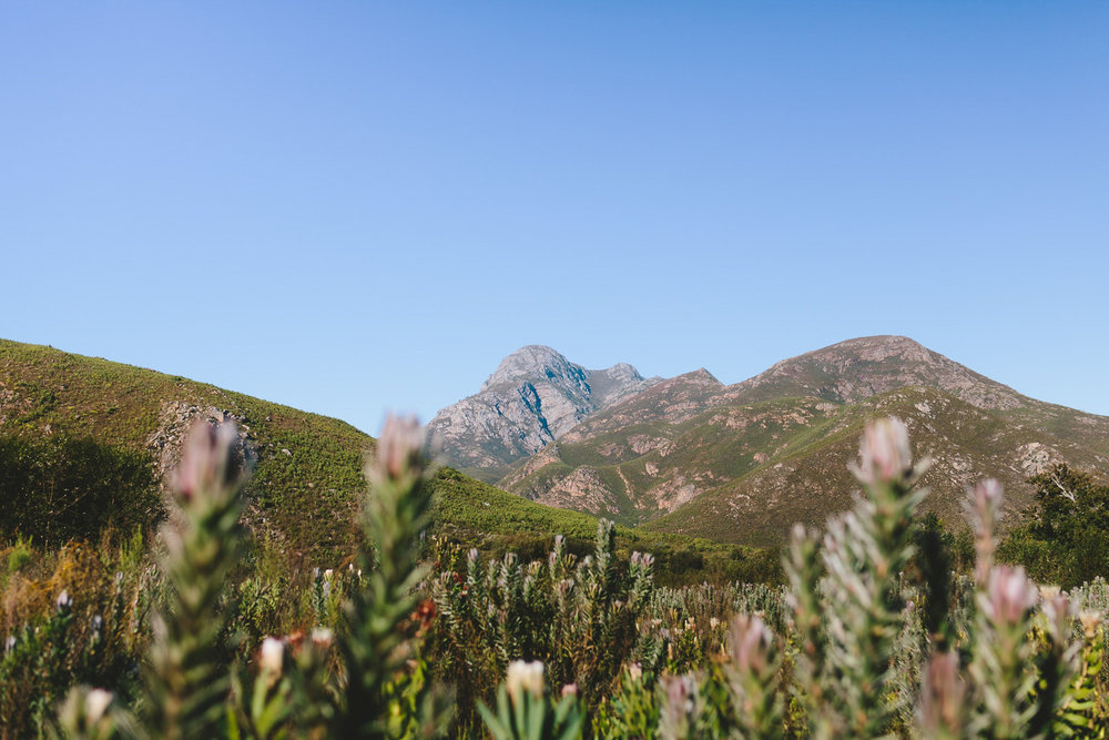 greyton-wedding-western-cape-photographer-river-bed-proteas-south-african1.jpg