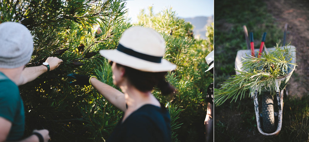 greyton-wedding-western-cape-photographer-river-bed-proteas-south-african10.jpg