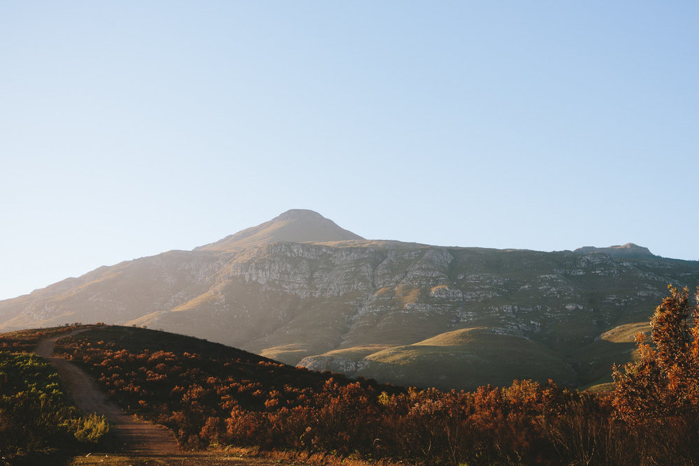 greyton-wedding-western-cape-photographer-river-bed-proteas-south-african14.jpg
